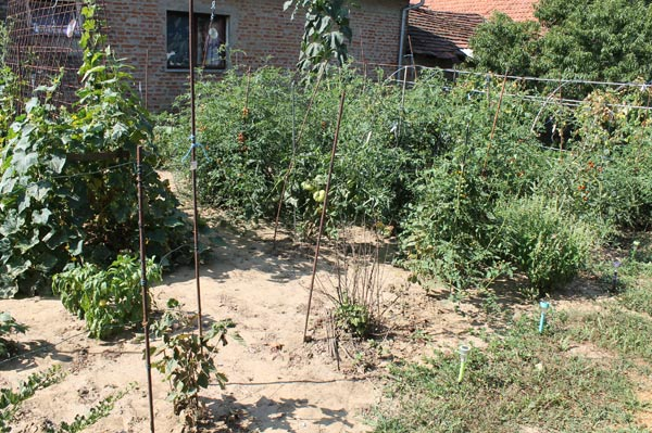 Teil Tomatengarten 15 August 2021