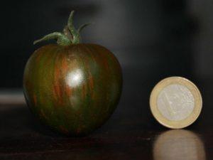 Black Zebra Cherry Tomate