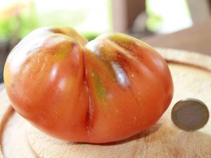 Reife Bosque Blue Tomate