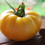 Brandy Weine gelb reife Tomate
