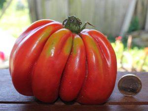 Bührer Keel Zahnrad-Tomate