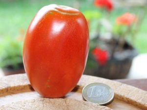 Rote De Berao Tomate