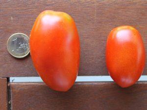 Zwei reife De Berao Tomaten
