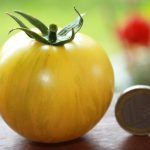 Tomate Gelber Tiger