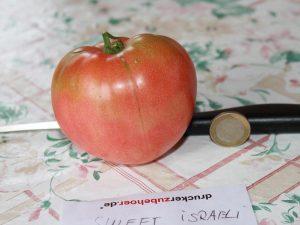 Sweet Israeli Tomate