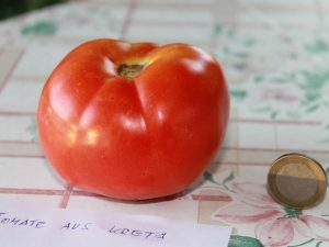 Tomate aus Kreta