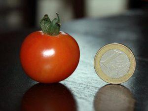 Zuckertraube Tomate