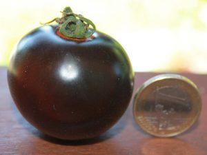 Negro Azteca Tomate