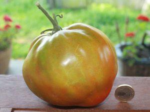 Reinhard Chocoble Tomate