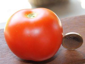 Reife Rideau Sweet Tomate