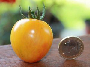 Sunrise Bumblebee Tomate