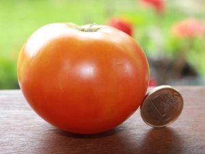 Veras Paradeiser Tomate reif