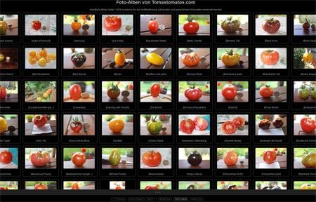 Tomatenfoto Galerie von TomasTomatos.com