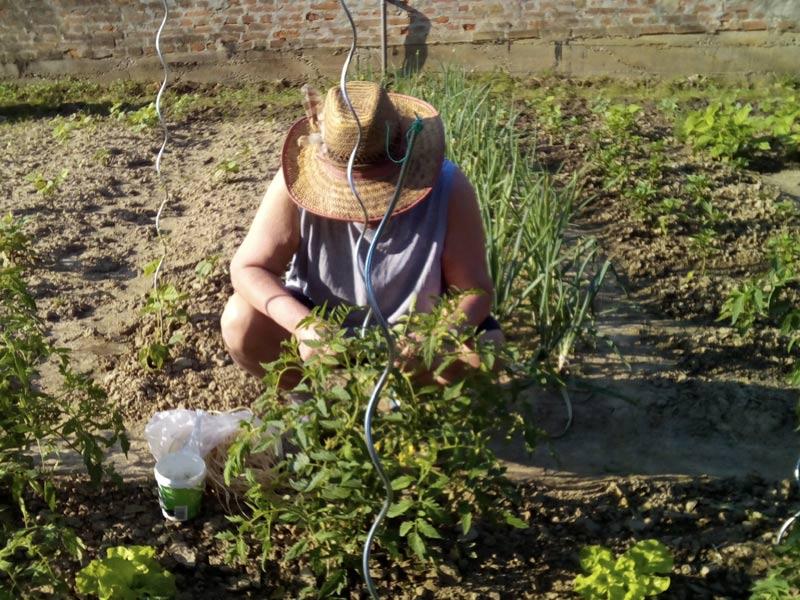 Alter Tomatenbauer oder was?