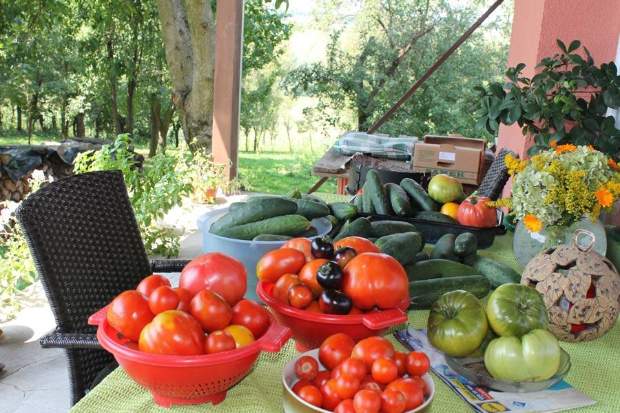 Buntes Erntebild auf dem Tisch in unserem Hof