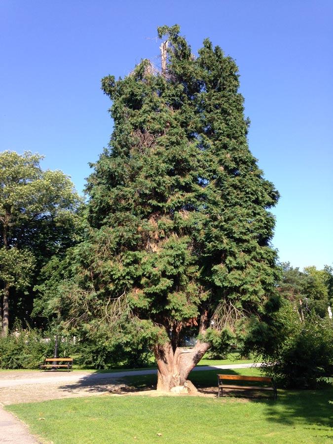 Mit Unterstützung durch Arbeit von Sozialhilfeempfängern sehen die Parks und öffentliche Plätze in der Stadt Bjelovar recht gepflegt aus.